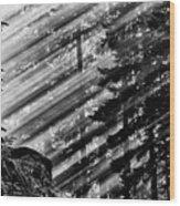 Sunbeams Through The Pines - Mount Rainier Wood Print
