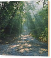 Sunbeams Through Trees Wood Print