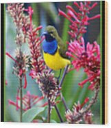 Sunbird Wood Print by Holly Kempe