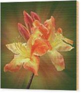 Sunburst Orange Azalea Wood Print
