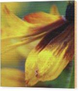 Sunburst Petals - 2 Wood Print