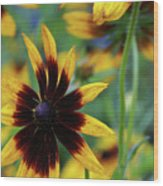 Sunburst Petals Wood Print