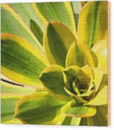 Sunburst Succulent Close-up 2 Wood Print