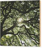 Sunburst Through Tree Wood Print