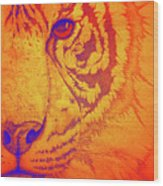 Sunburst Tiger Wood Print