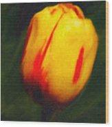 Sunburst Tulip Wood Print