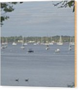 Sunday Morning Swim On Manhasset Bay In Port Washington, Ny Wood Print