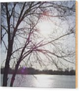 Sundown In Tree Wood Print