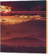 Sunflare Wood Print