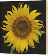 Sunflower 1 Wood Print