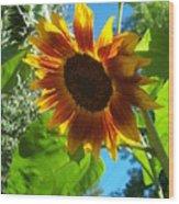 Sunflower 101 Wood Print