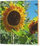 Sunflower 102 Wood Print