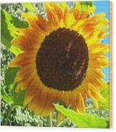 Sunflower 103 Wood Print