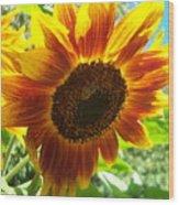 Sunflower 104 Wood Print
