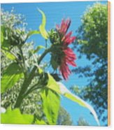 Sunflower 105 Wood Print