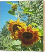 Sunflower 106 Wood Print