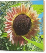 Sunflower 107 Wood Print