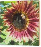 Sunflower 108 Wood Print