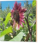 Sunflower 111 Wood Print