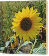 Sunflower 12 Wood Print