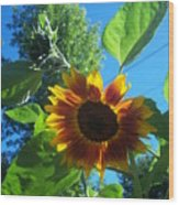 Sunflower 120 Wood Print