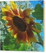 Sunflower 121 Wood Print