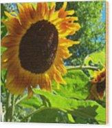 Sunflower 122 Wood Print