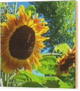 Sunflower 123 Wood Print