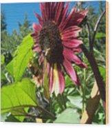 Sunflower 127 Wood Print