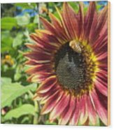 Sunflower 129 Wood Print