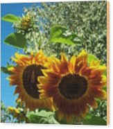 Sunflower 132 Wood Print