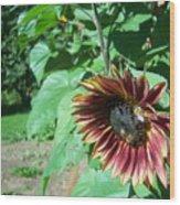 Sunflower 134 Wood Print