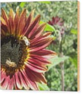 Sunflower 135 Wood Print