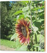 Sunflower 137 Wood Print