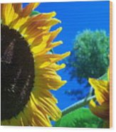 Sunflower 138 Wood Print
