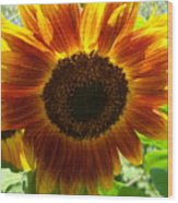 Sunflower 141 Wood Print