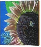 Sunflower 142 Wood Print