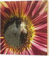 Sunflower 145 Wood Print
