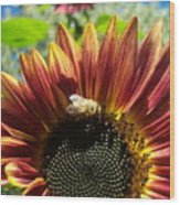 Sunflower 146 Wood Print