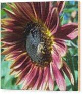 Sunflower 147 Wood Print