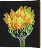 Sunflower 18-15 Wood Print