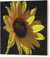 Sunflower 2 Wood Print
