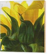 Sunflower 2015 2 Wood Print