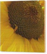 Sunflower 2015 5 Wood Print