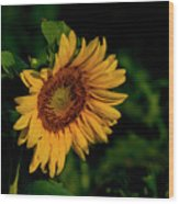Sunflower 2017 11 Wood Print