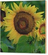 Sunflower 2017 9 Wood Print