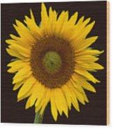 Sunflower 3 Wood Print