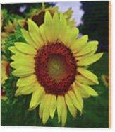 Sunflower After A Summer Rain Wood Print