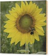 Sunflower Among The Weeds Wood Print