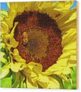 Sunflower And Bee Wood Print